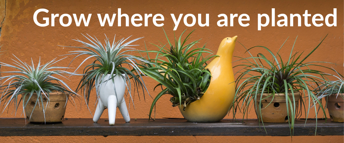 Grow where you are planted banner